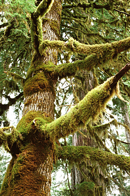 Physical control of moss on trees